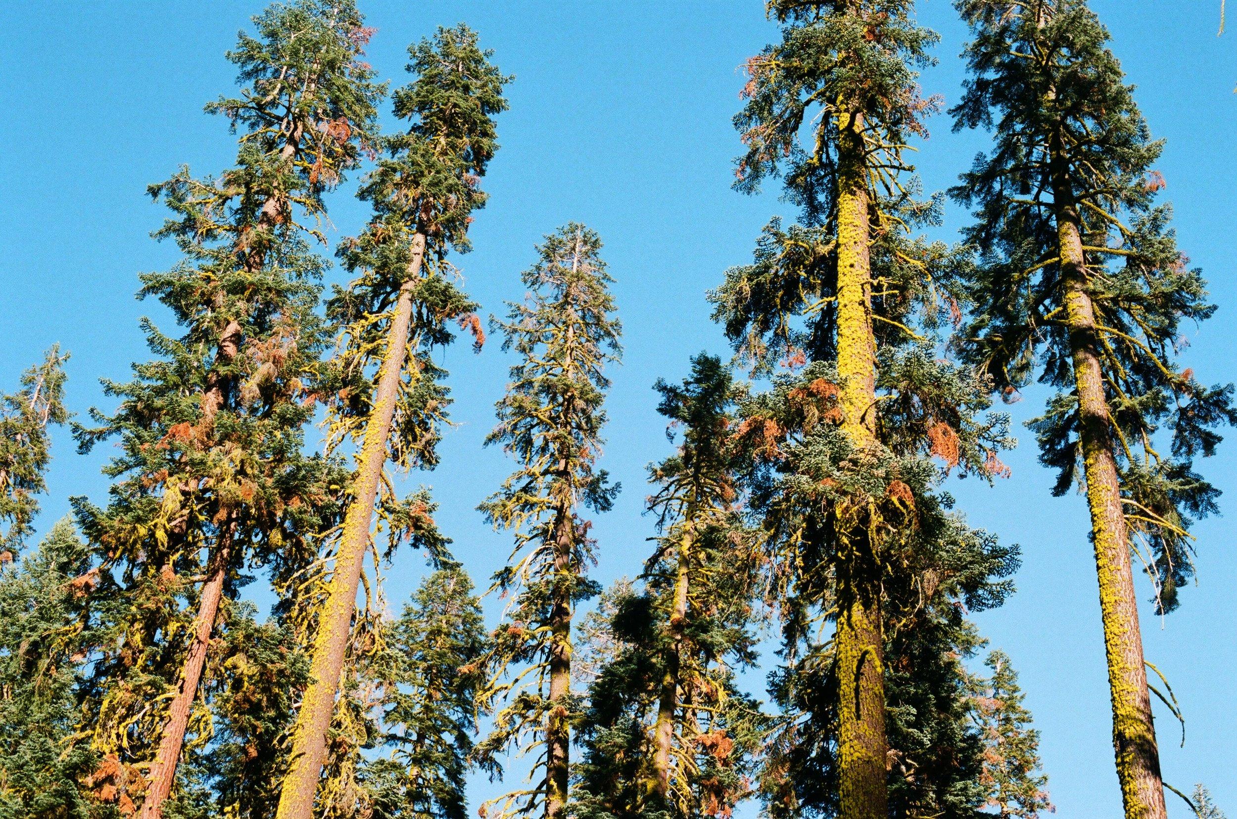 Yosemite8.jpg