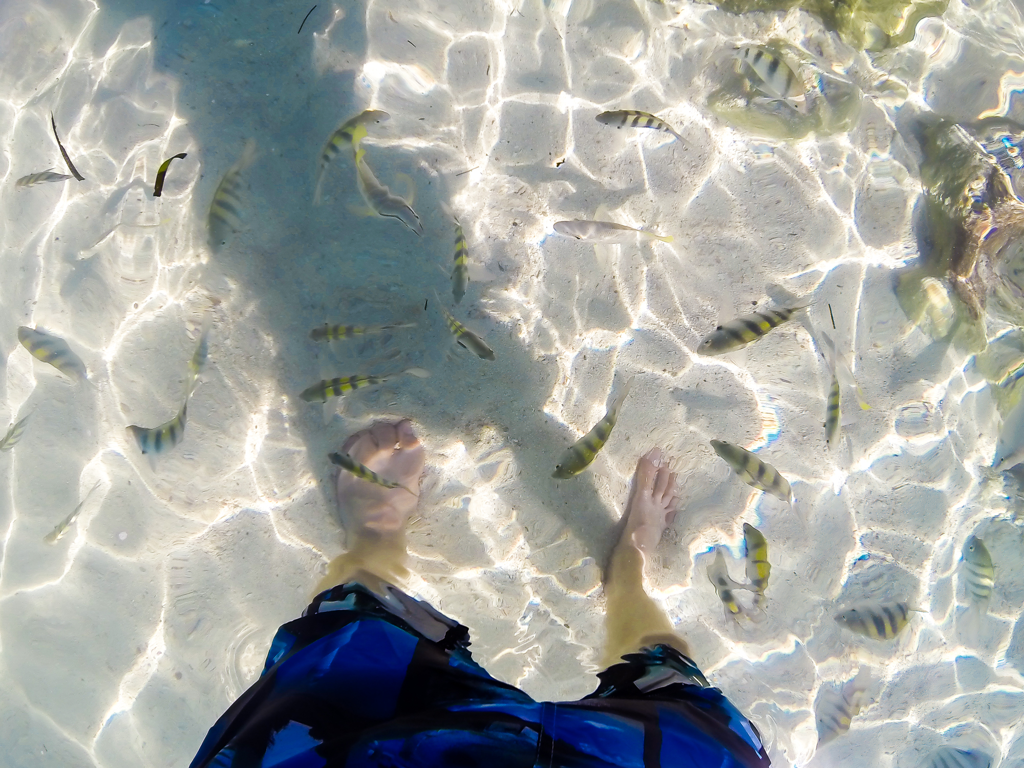 GETTING SURROUNDED BY THE FRIENDLY FISH