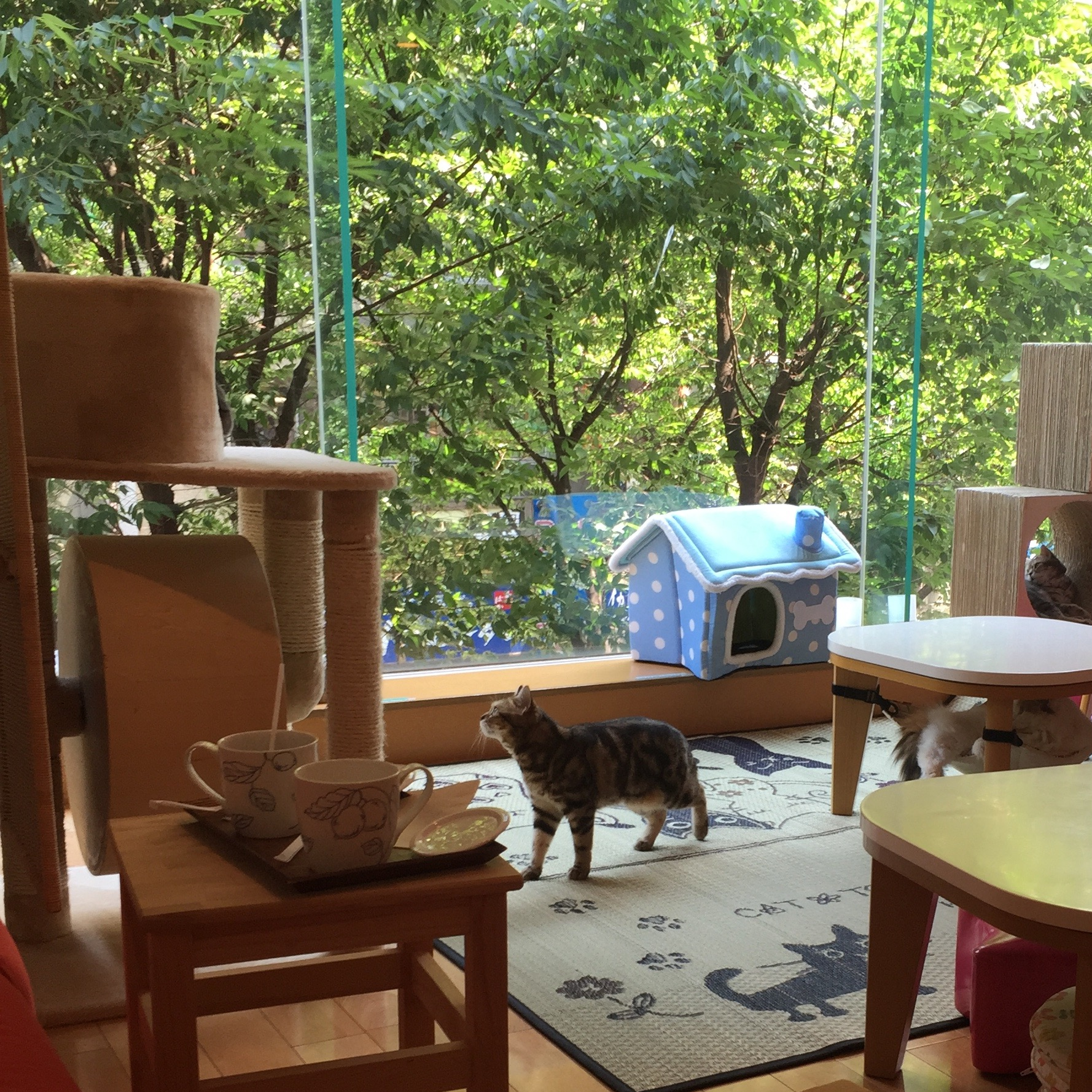 View of the cat cafe from the other side