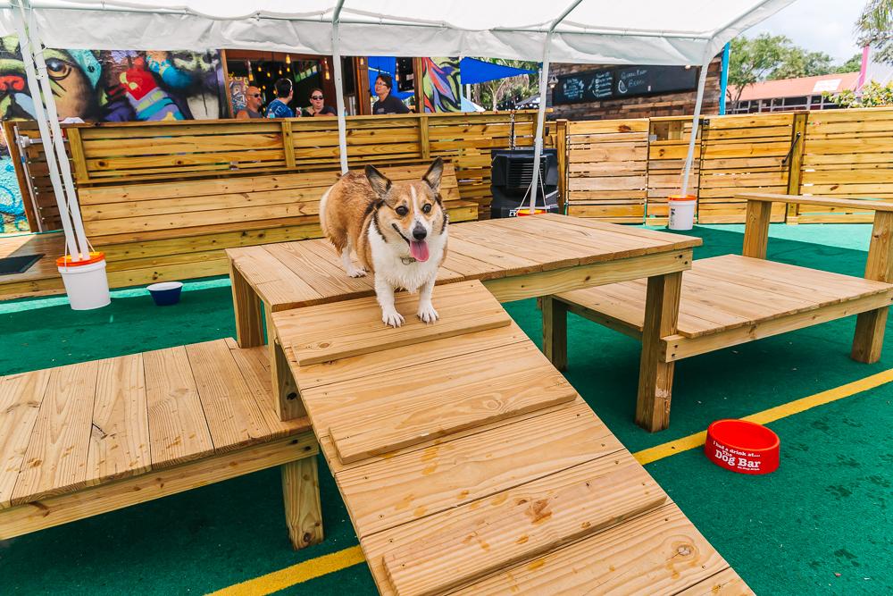 Fun dog ramp Kuma enjoyed