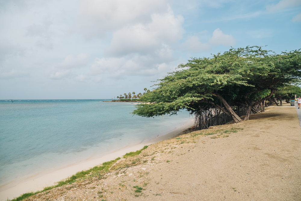Aruba trees www.thetravelpockets.com