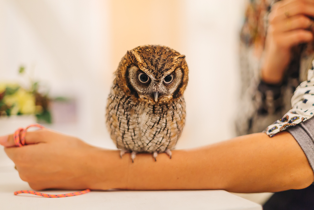 Our first cute owl we got to hold