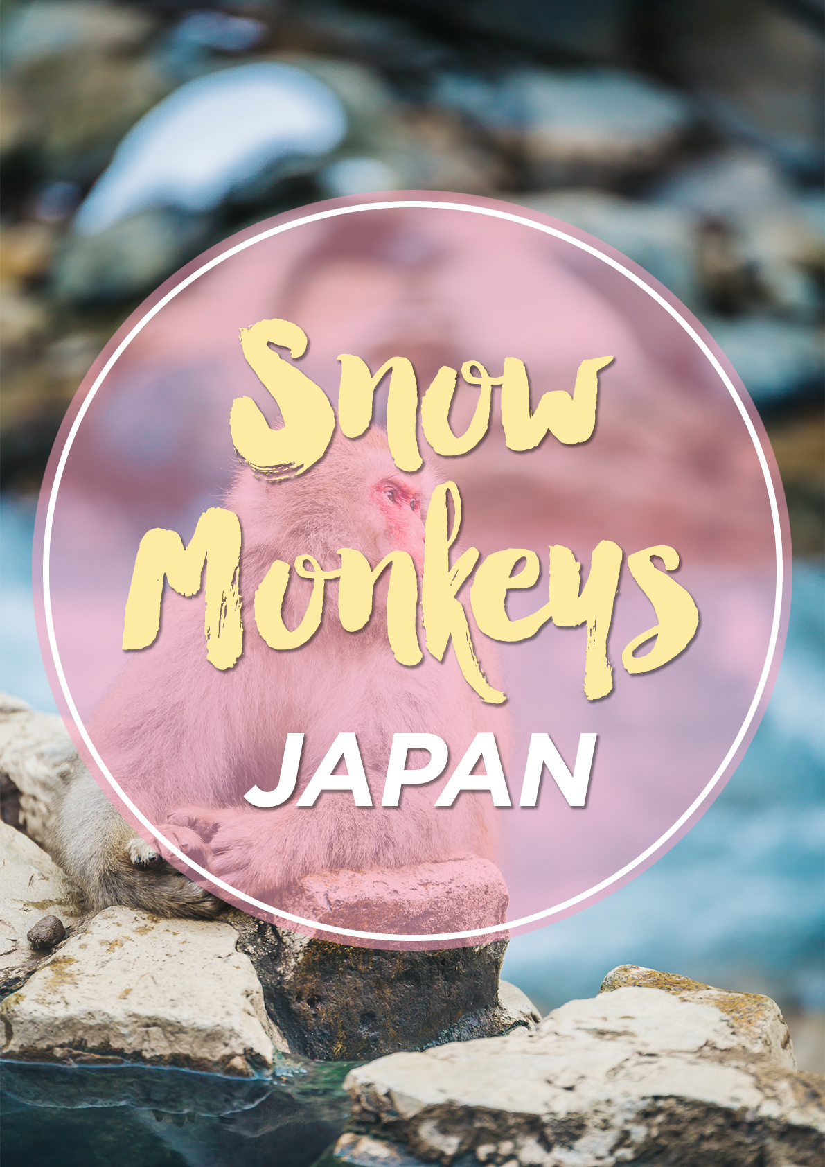 PINTEREST Snow Monkeys www.thetravelpockets.com