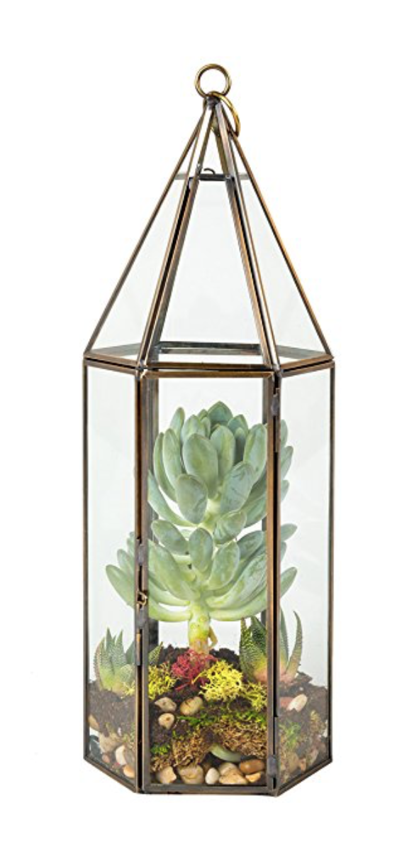 Succulent & Hanging Air Plant