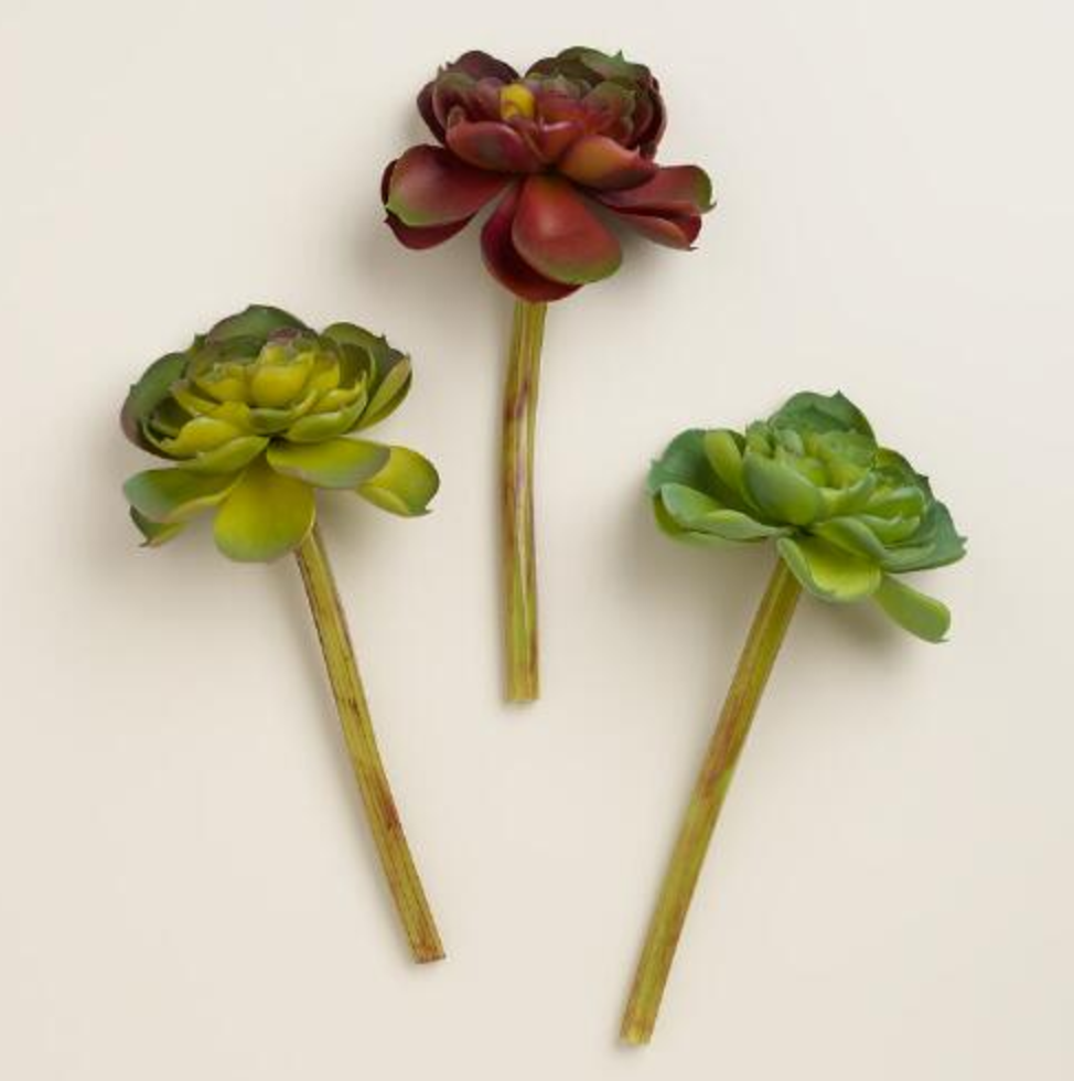 World Market Echeveria Stems