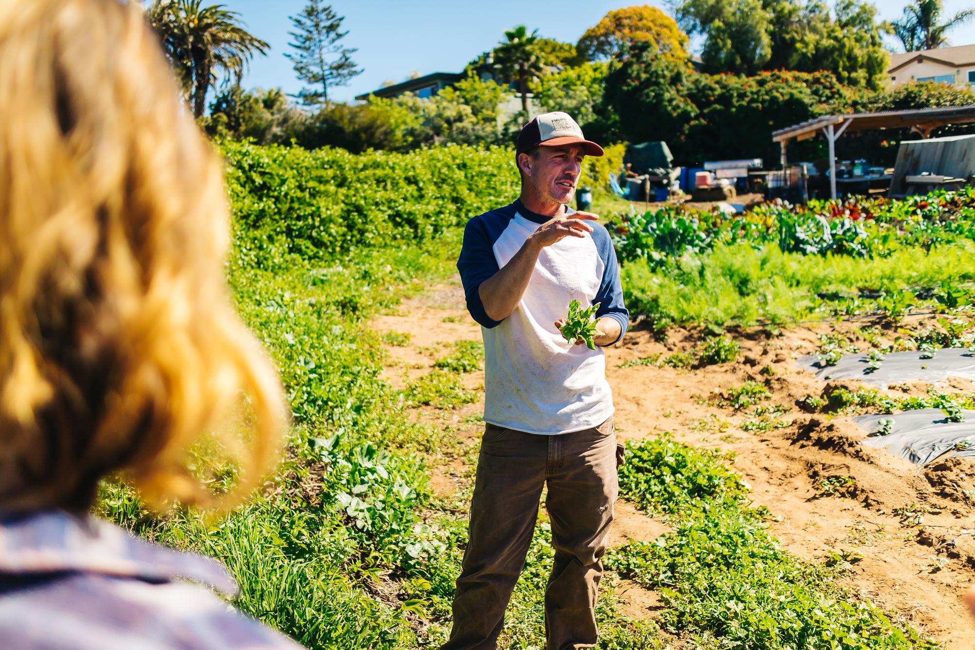 CYCLOPS FARMS + www.thetravelpockets.com