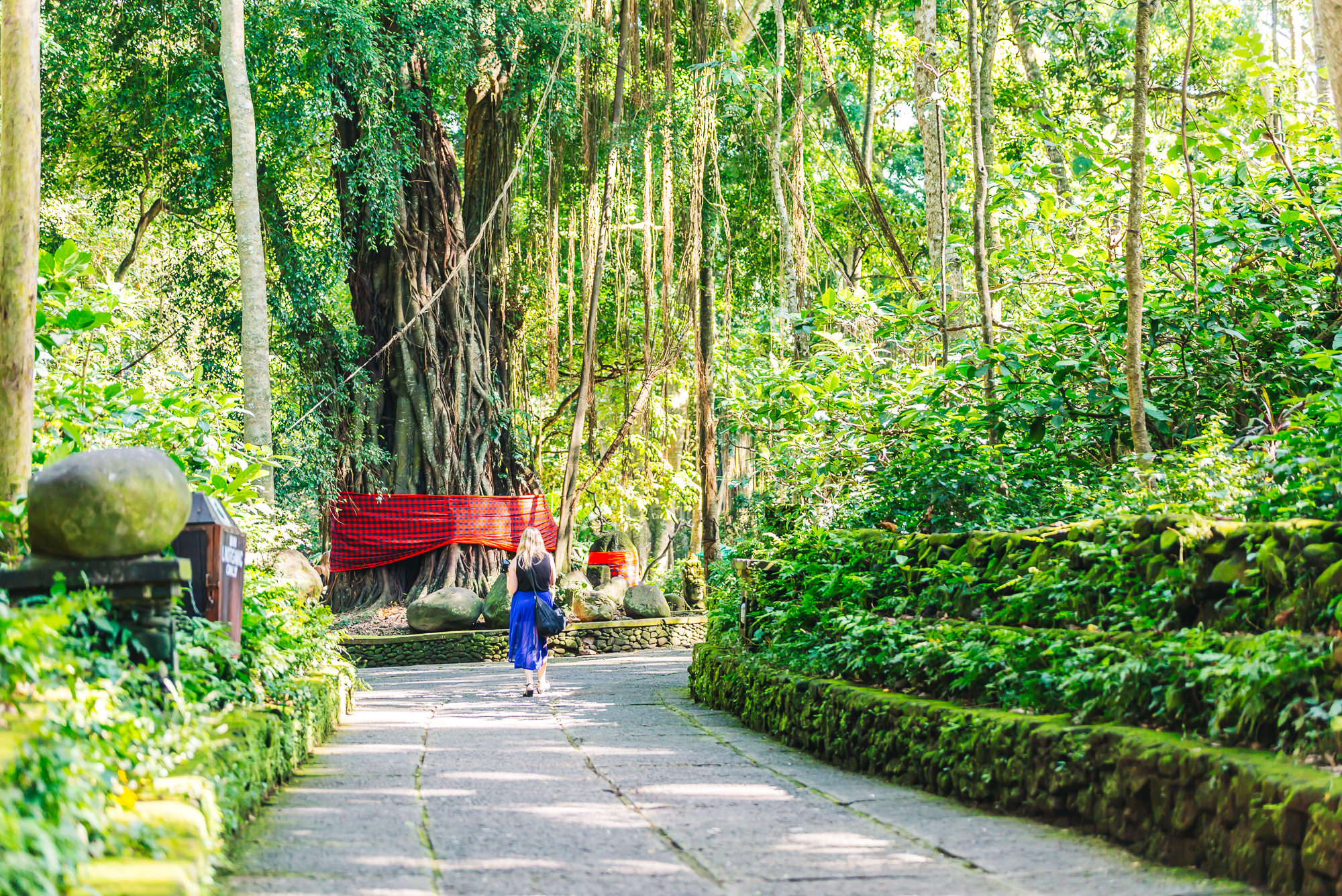 Beautiful shaded park of the Sacred Monkey Forest