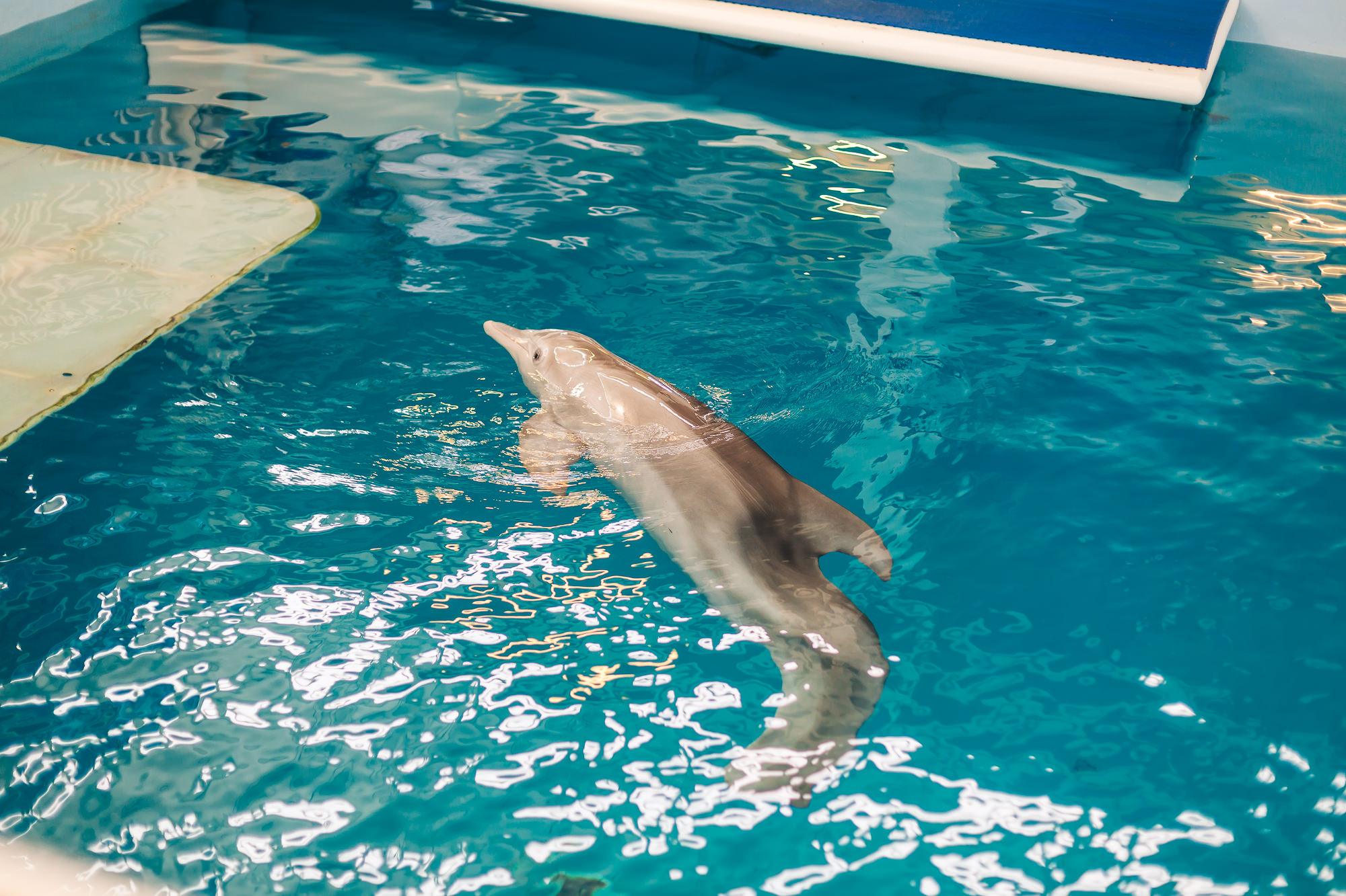 It's Winter the dolphin!