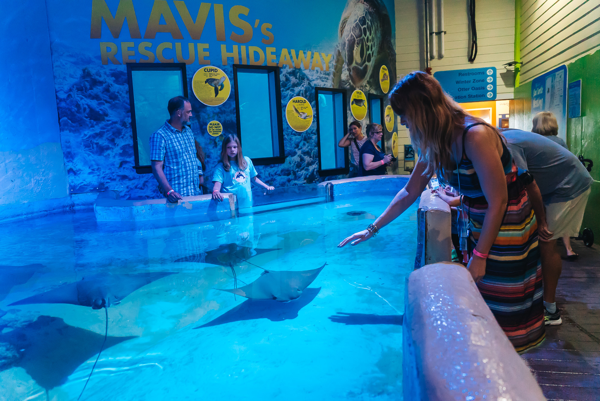 Trying to touch a sting ray.