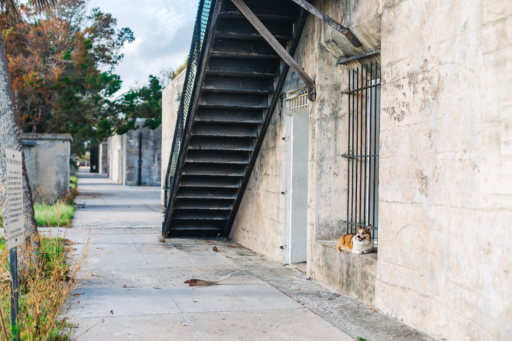 Kuma had a great time exploring Battery Laidley at Fort De Soto Park
