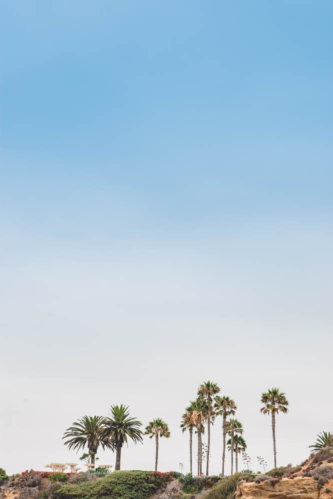 The gorgeous palm tree in Laguna