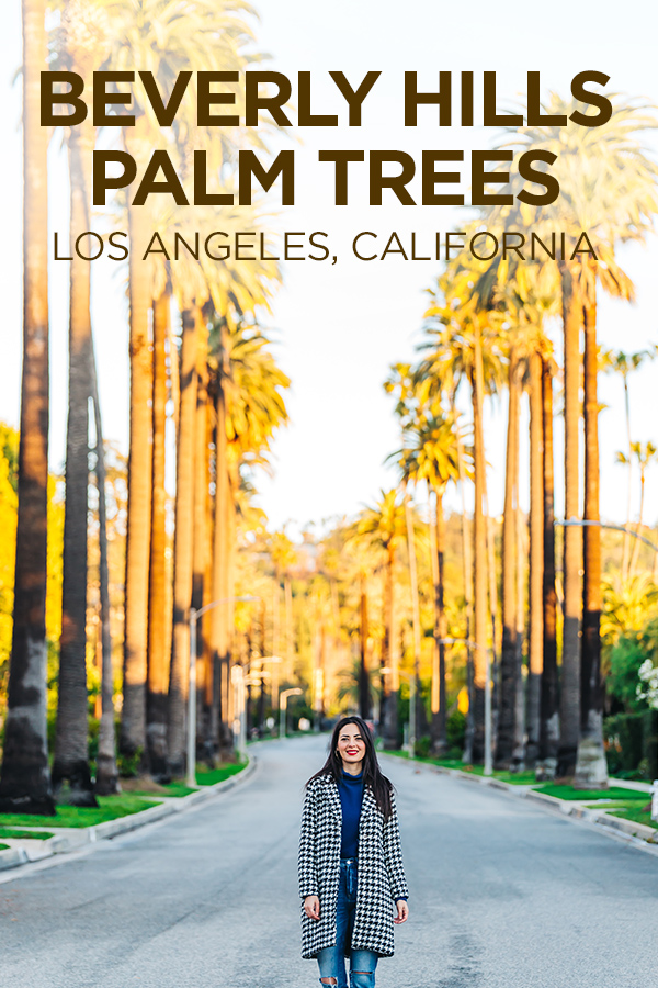 Palm Tree Street #BeverlyHills #LosAngeles #California #USA