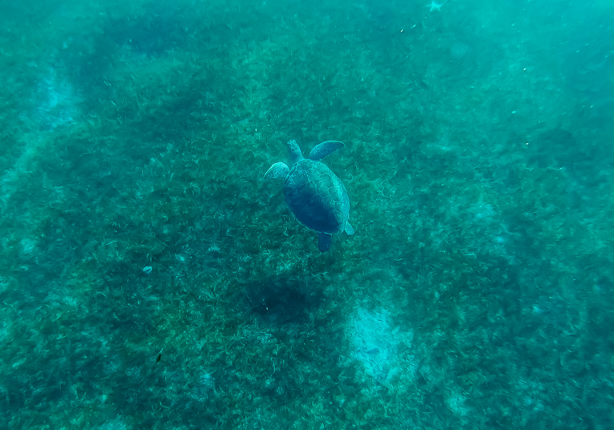 Spotted a sea turtle!