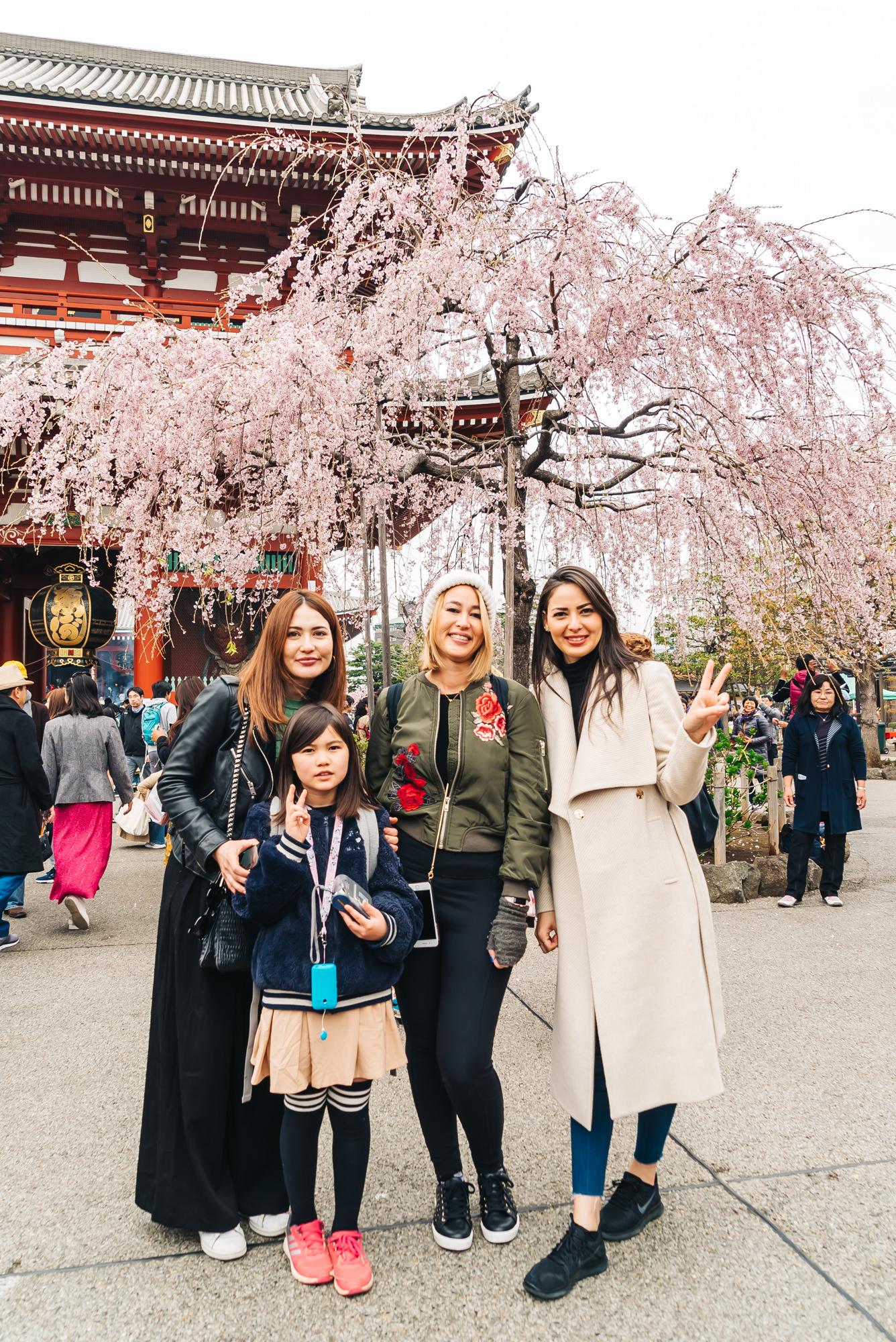 Gorgeous cherry blossom tree by the Sensoji Temple