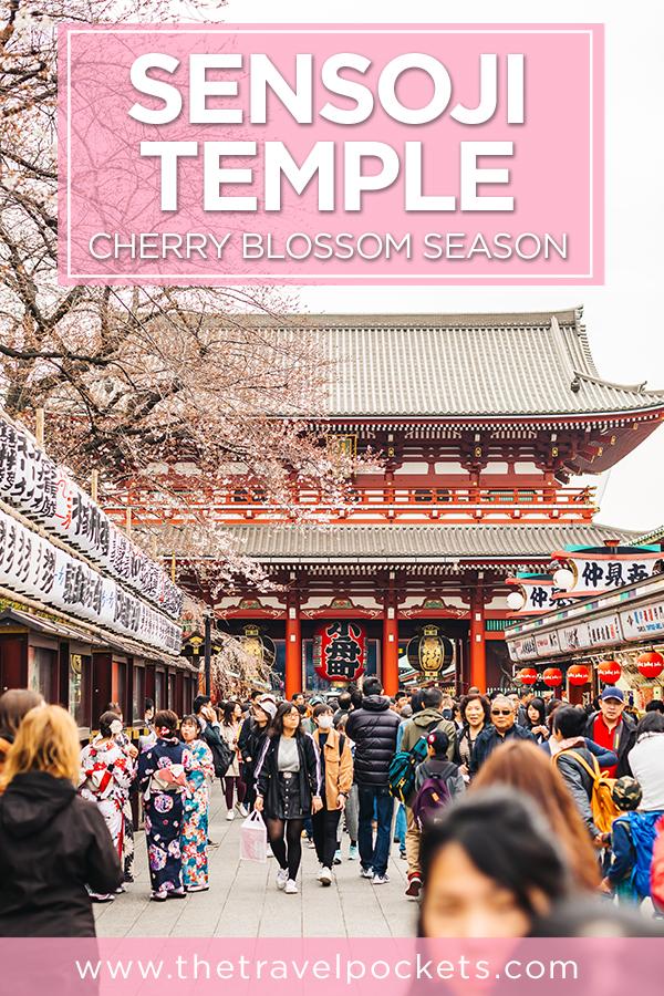 Sensoji Temple during cherry blossom season #Asakusa #Japan #Sensoji #cherryblossom