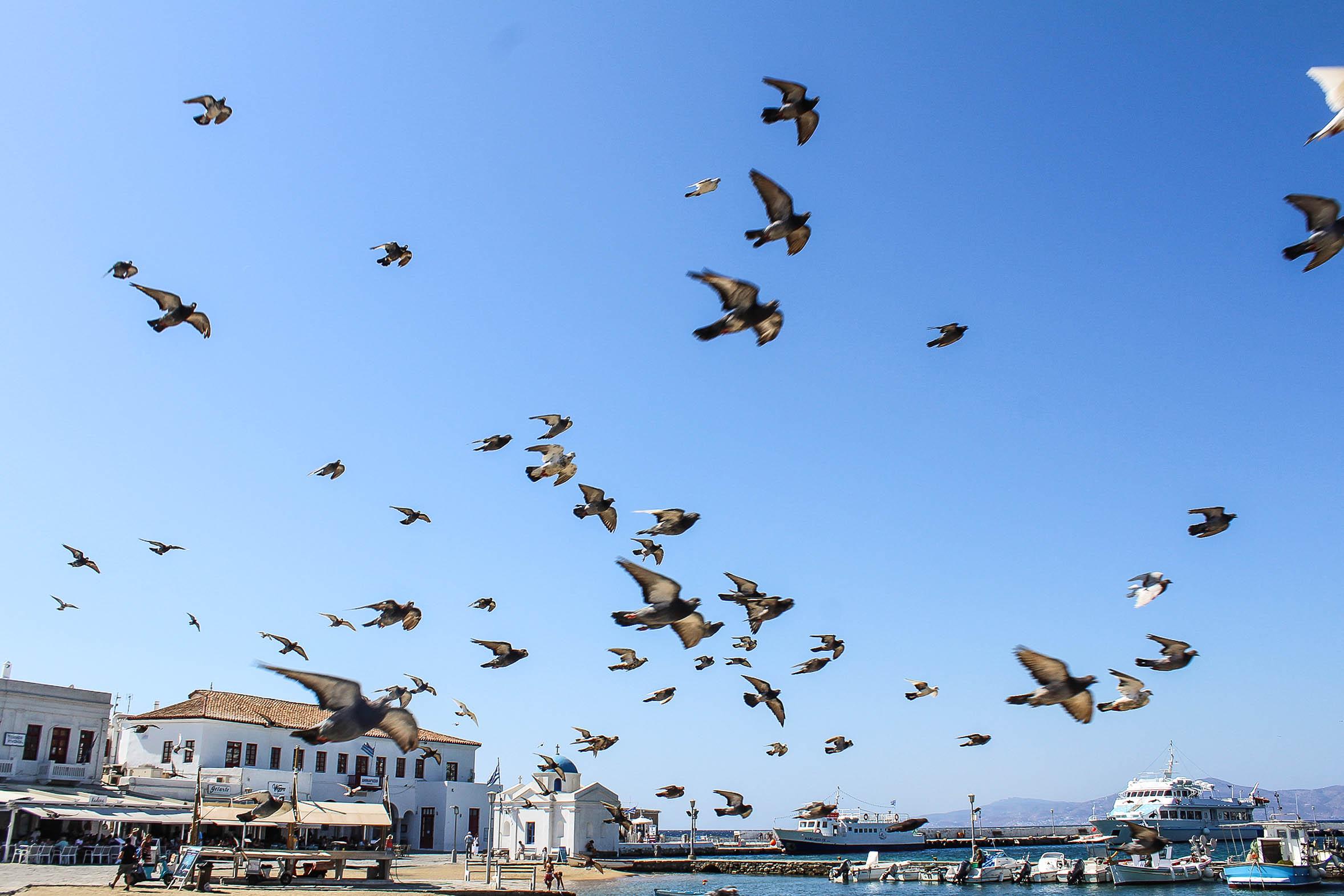 Mykonos Birds 1.jpg