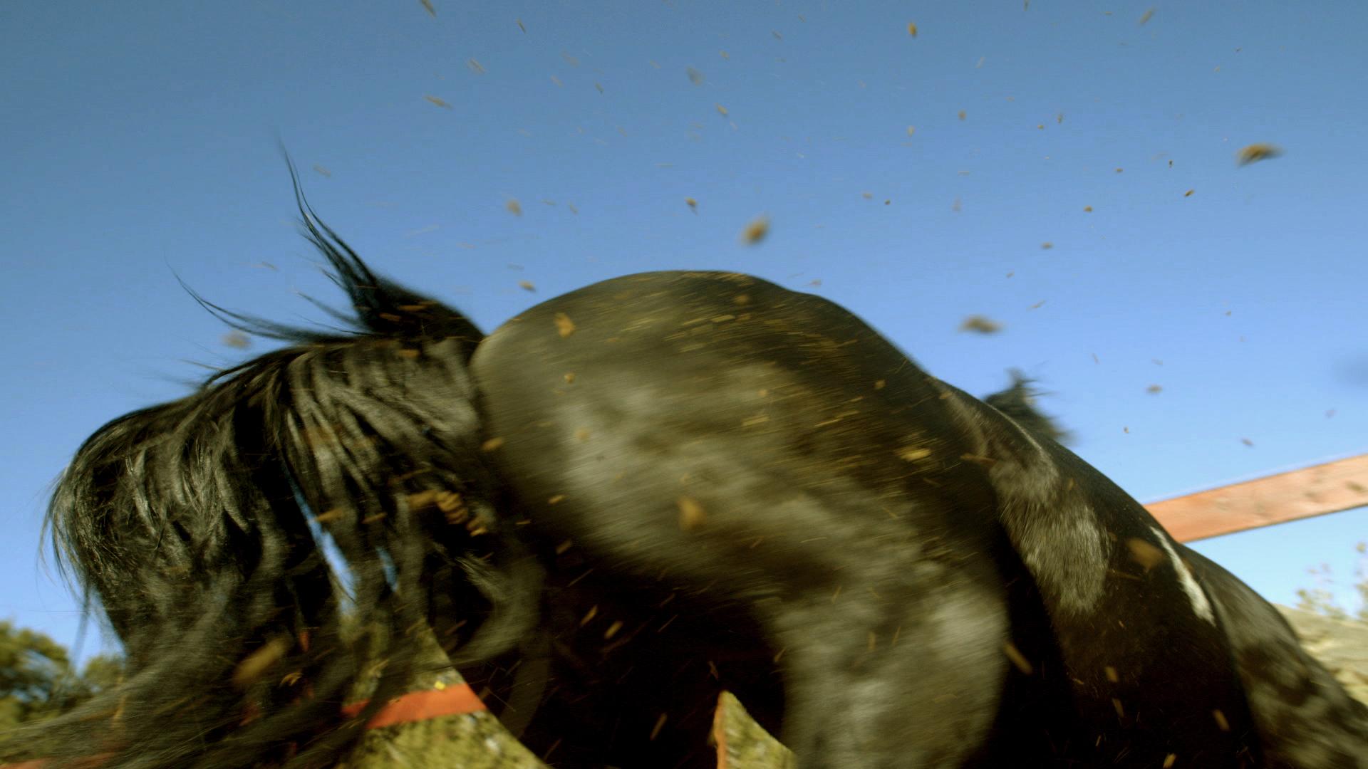 plains of yonder horse