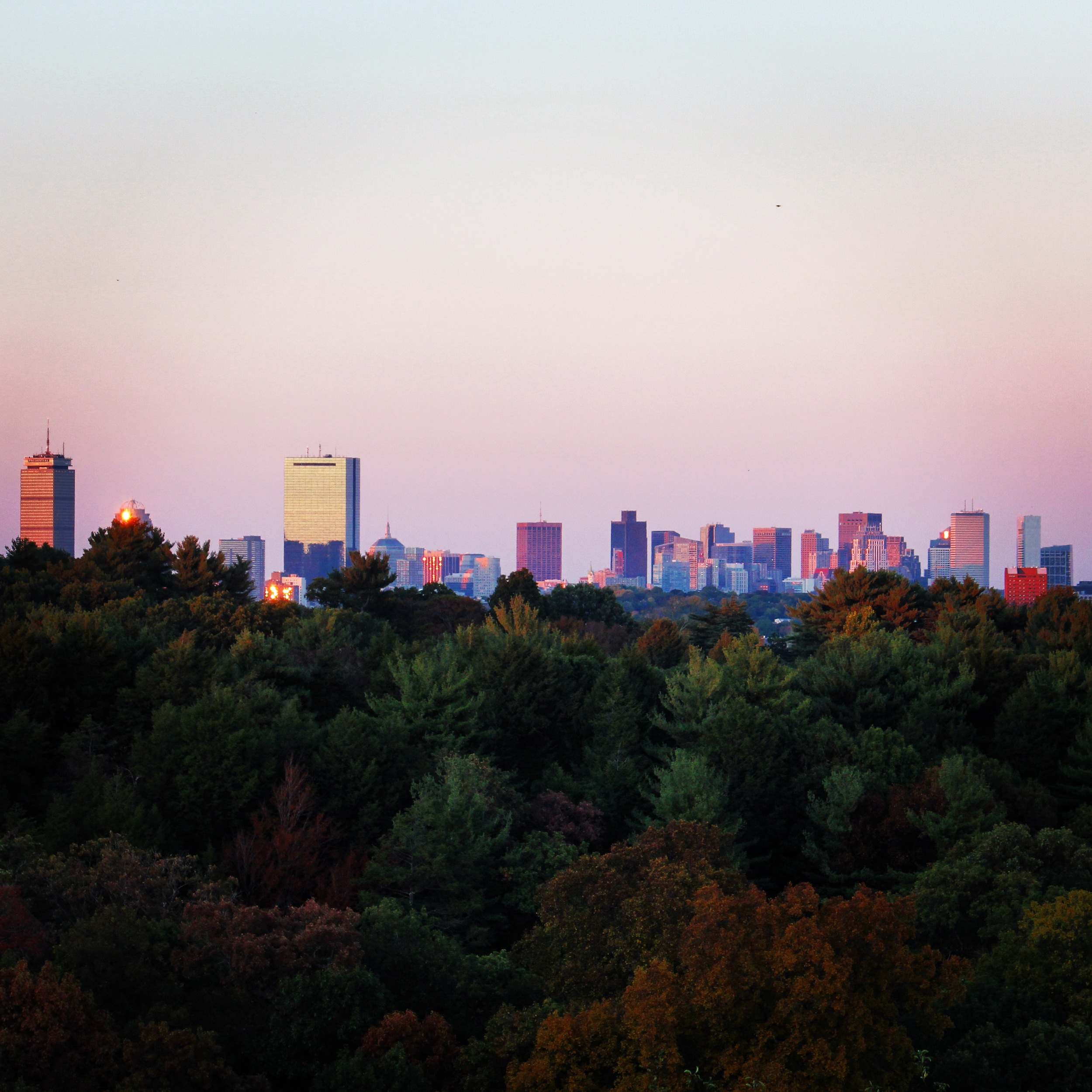 Boston Skyline from the Arnold Arboretum