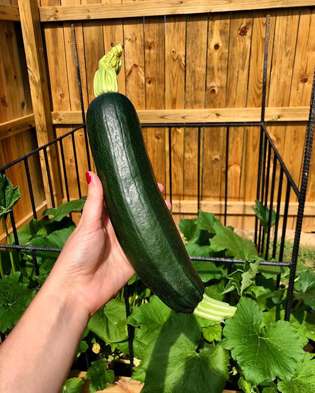Ladies and gentlemen, we have zucchini!