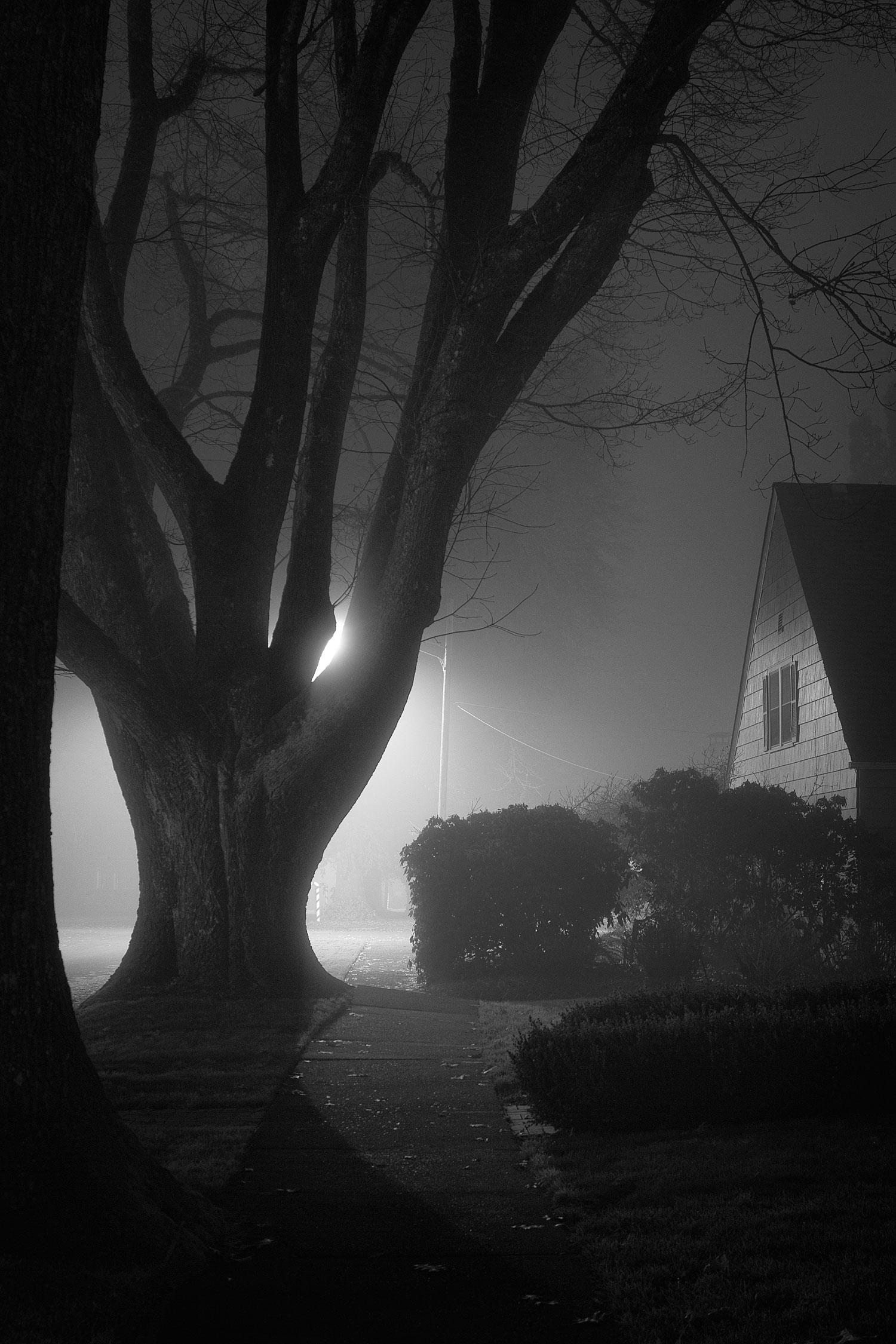 Fog Bow Tree