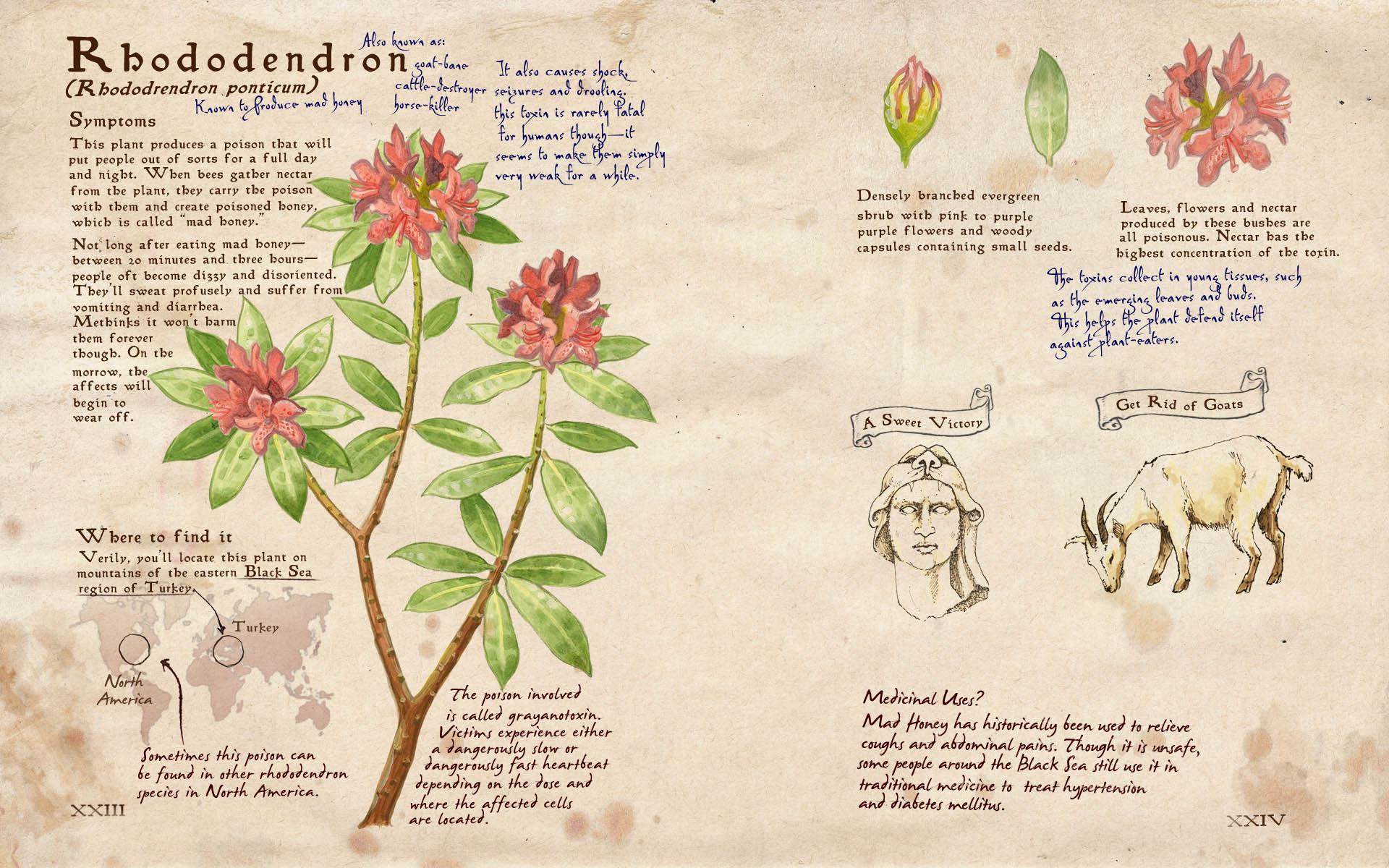 04_Rhododendron_v1.jpg