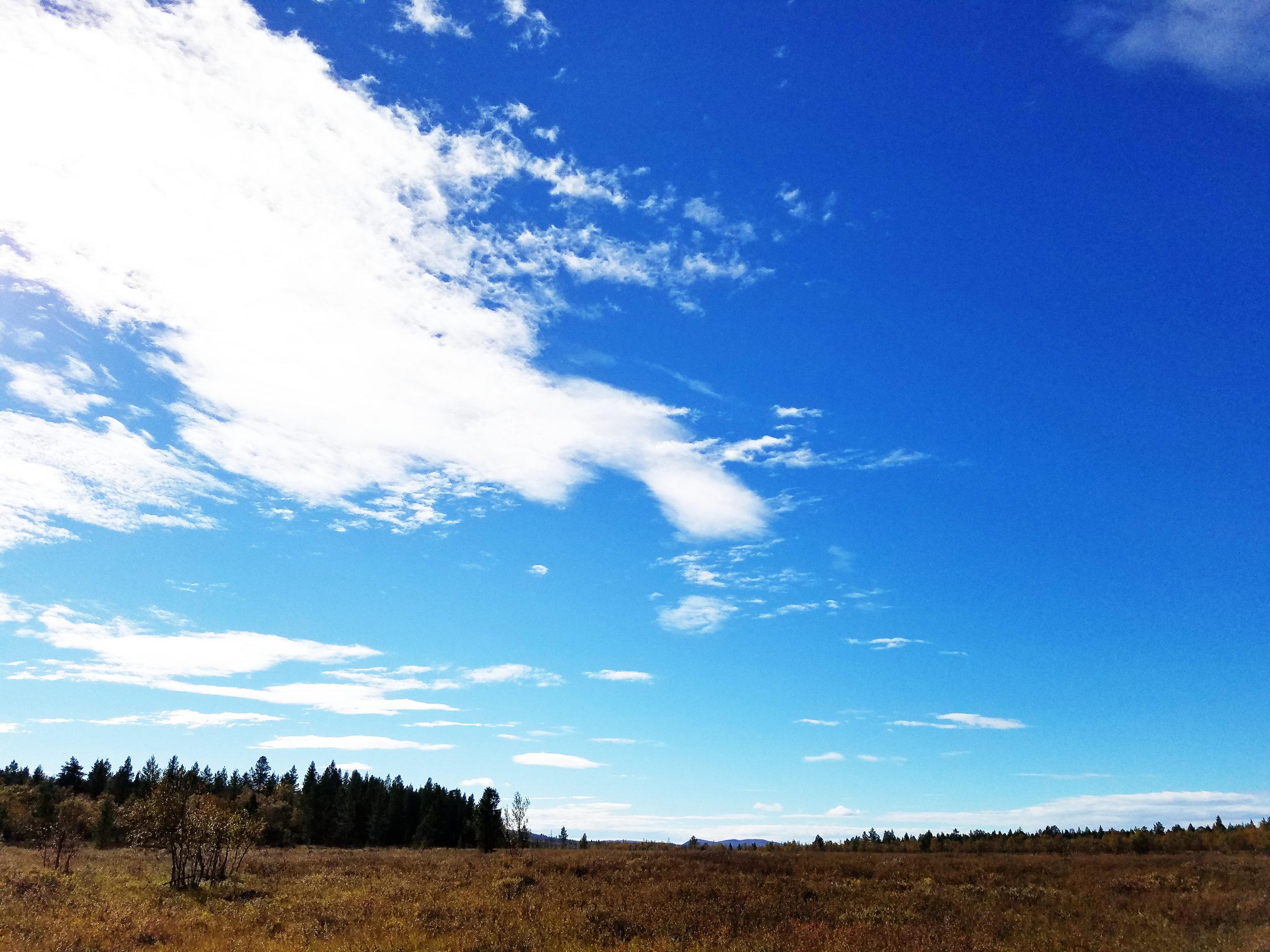 finland open wetland.jpg