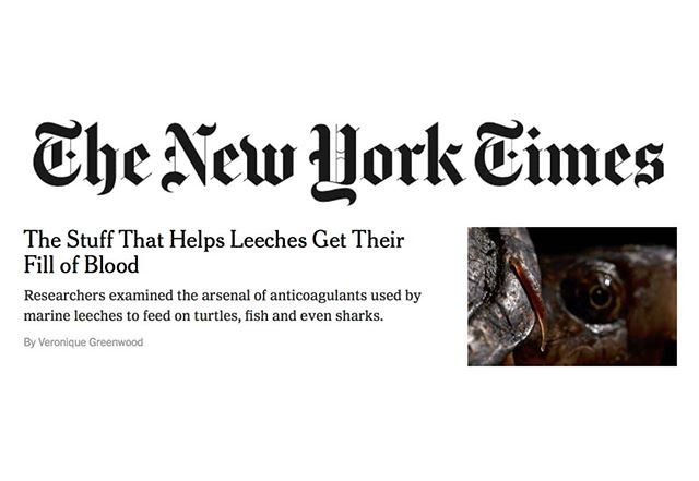 Thanks NY Times for covering my work with @leechguy @sebastian.kvist and others on anticoagulants in marine leeches! Some of these worms feed on sharks! The Stuff That Helps Leeches Get Their Fill of Blood https://nyti.ms/2Lw0oCU  #sciencetimes #nytimes #sciencemedia #amnh #anticoagulant #leech #piscicolidae #ozobranchidae #marineleech #sharkleech #scienceisfun #naturenerd