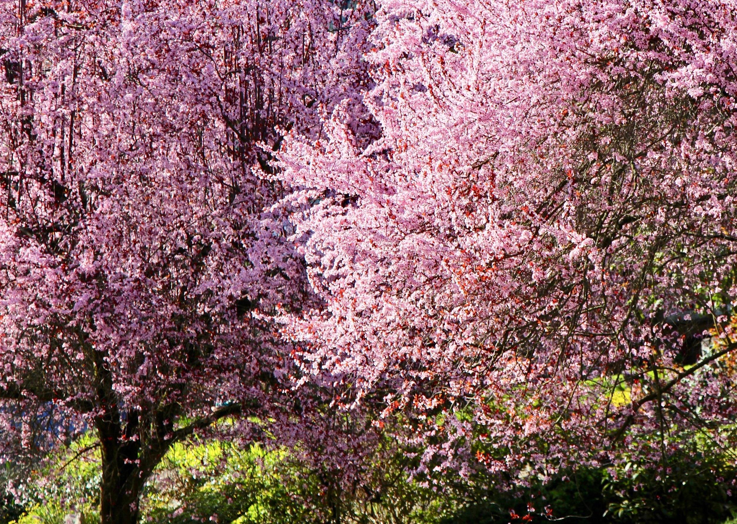Laurelhurst Park, Portland OR 2014