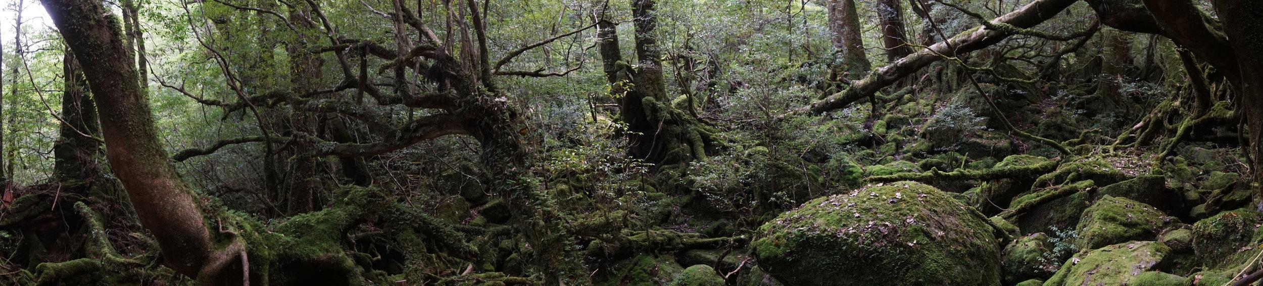 moss_forest_yakushima