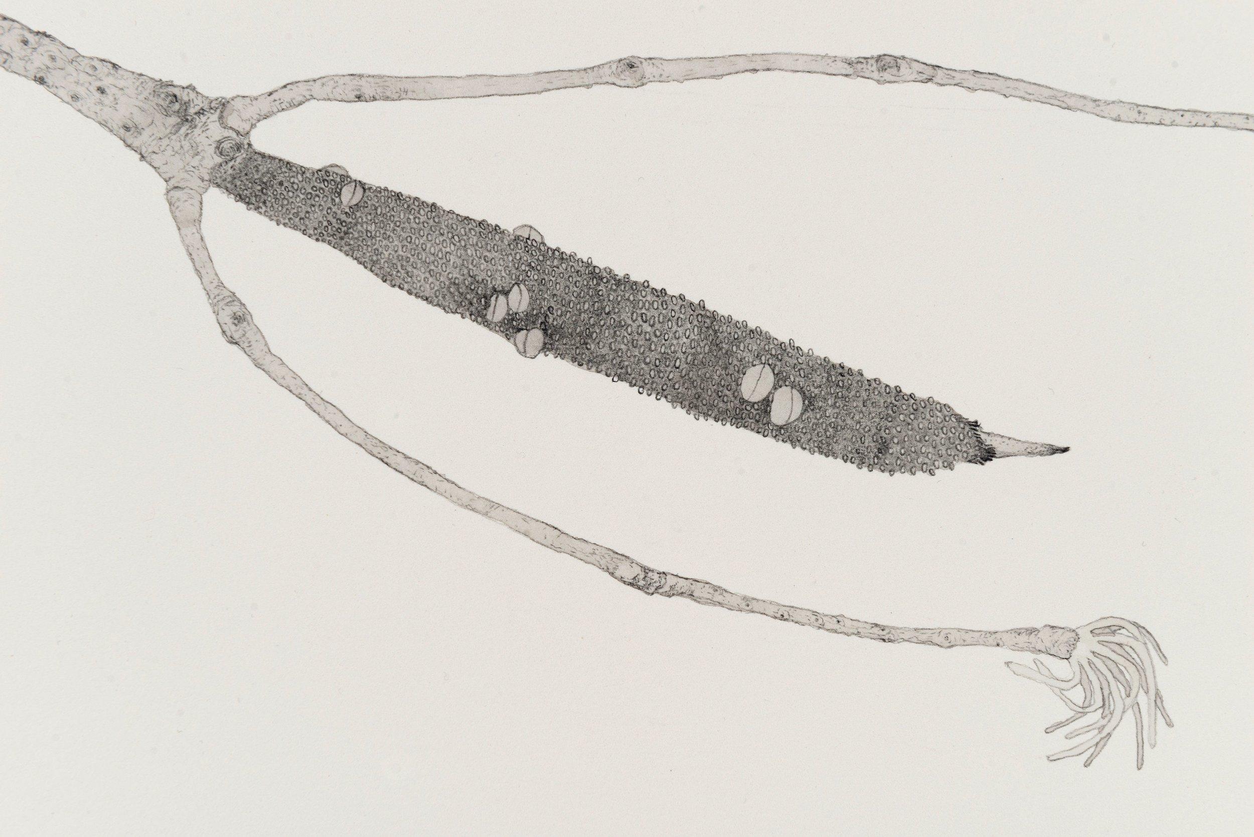 Filum (Detail), 2017, ink, graphite and pencil on paper, 57 x 76cm. Photographer: Eva Fernandez