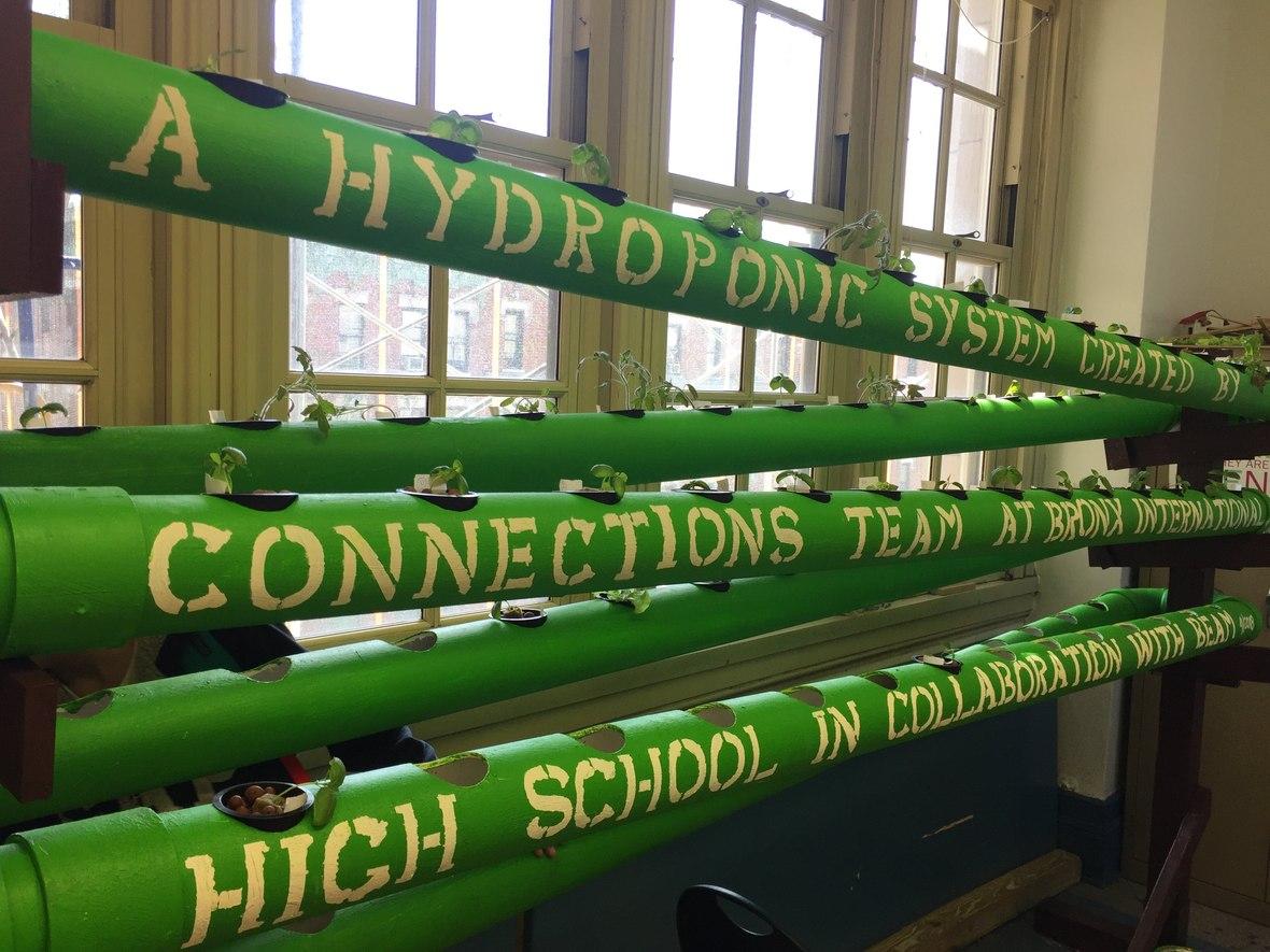 hydroponics green.jpeg