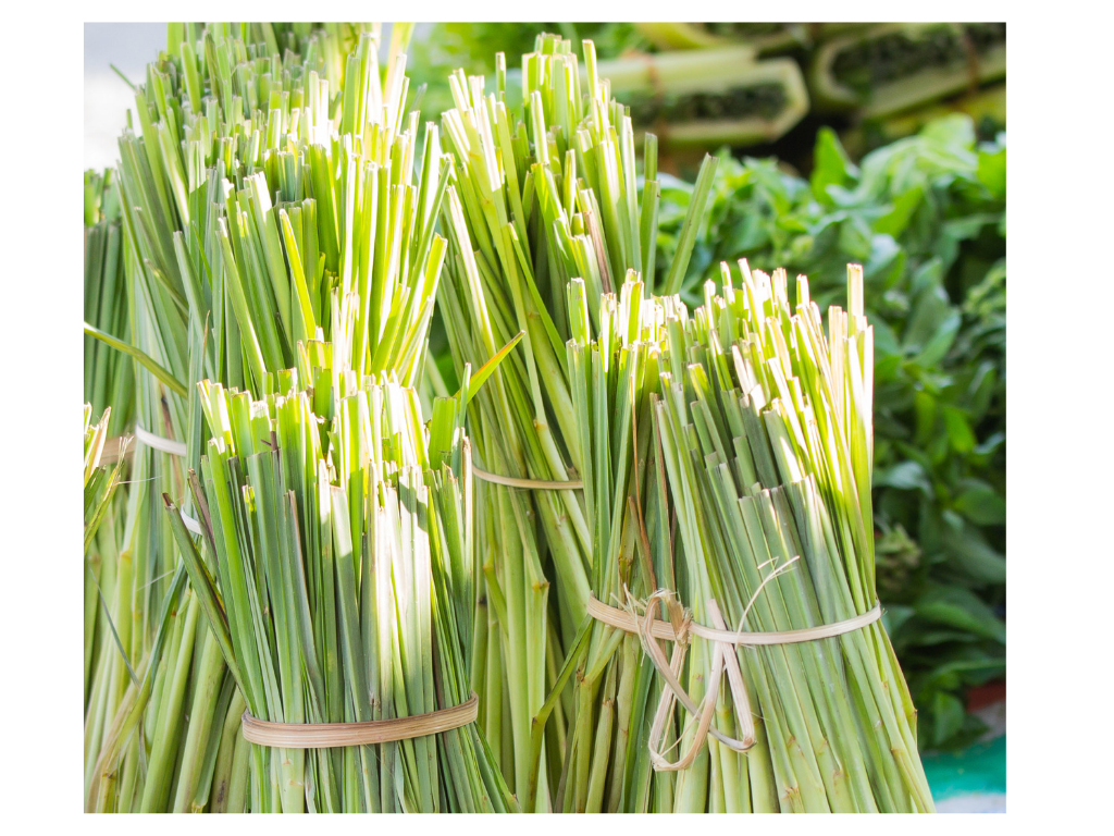 LEMONGRASS FROM EASTERN INDIA - Our soothing, revitalising organic lemongrass from the east of India is well known and widely used as a skin toner, a mood booster and a powerful detoxification ingredient which makes it perfect for a vibrant body wash.Strengthening and supporting your body's natural processes and in bringing everything back to its natural balance - for instance, it wards away exhaustion. If you're a sporty person, it may be helpful to lessen aching muscles after a workout, as it aids in draining lactic acid and boosting circulation.