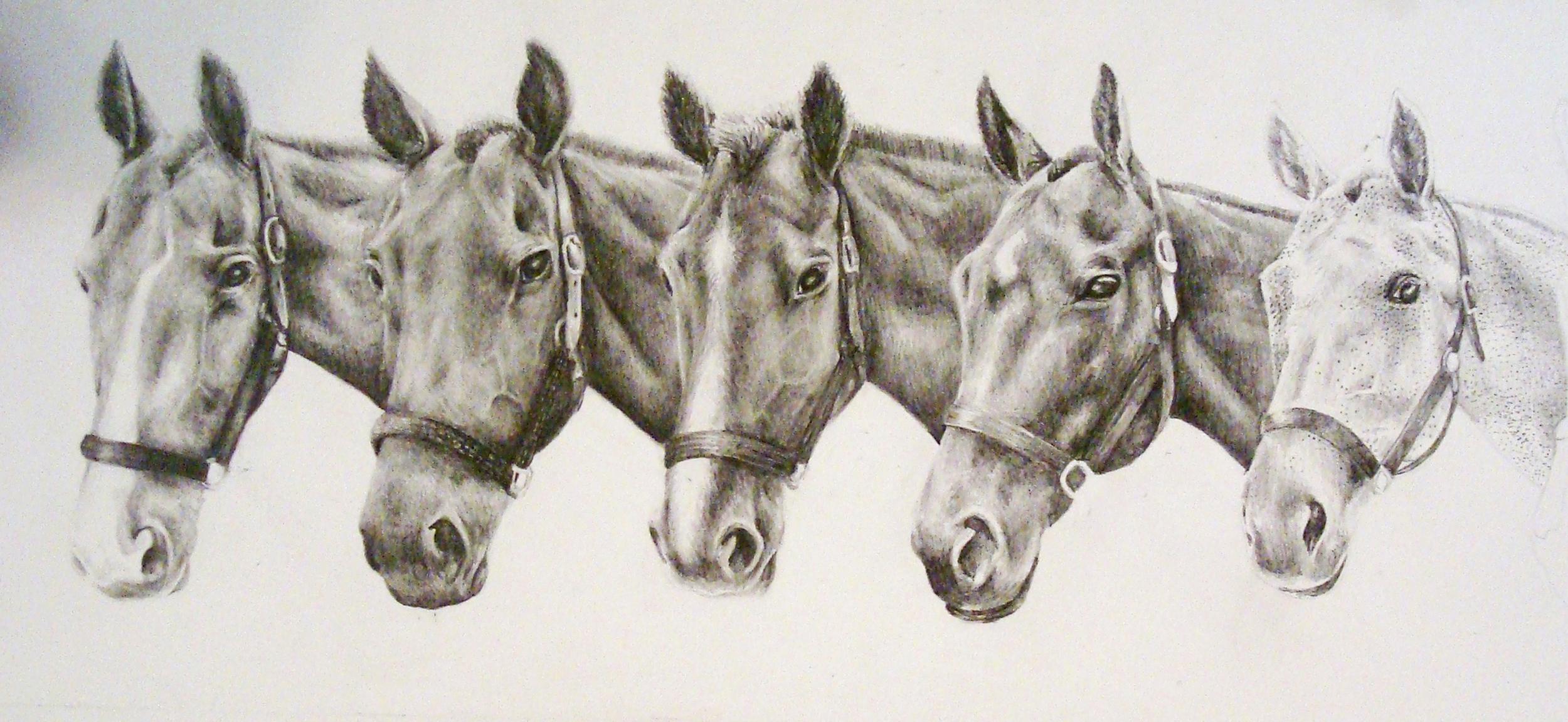 Polo Pony String