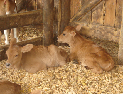ANimal Bedding livestock.png