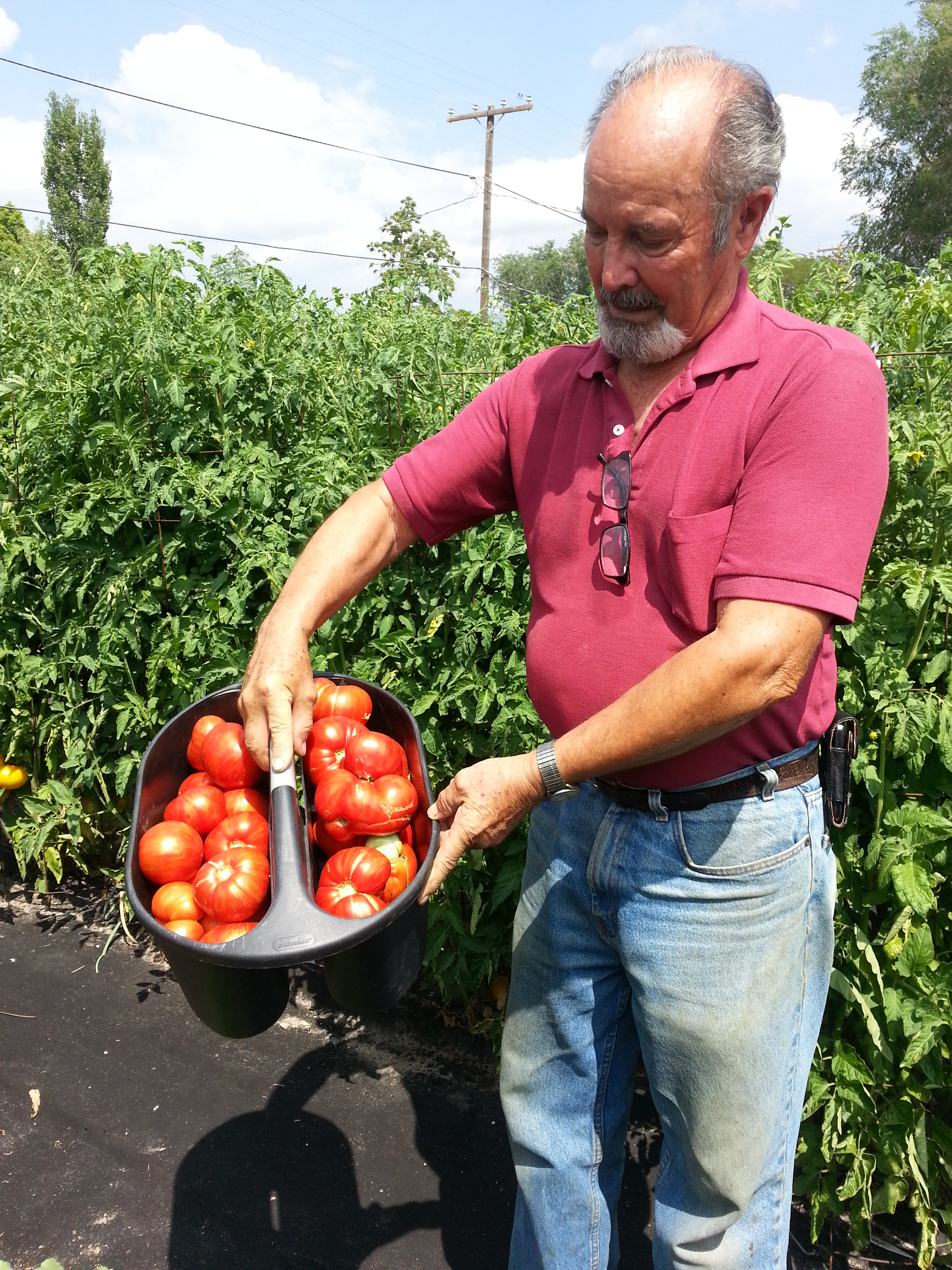 Joe's 1st Harvest.jpg