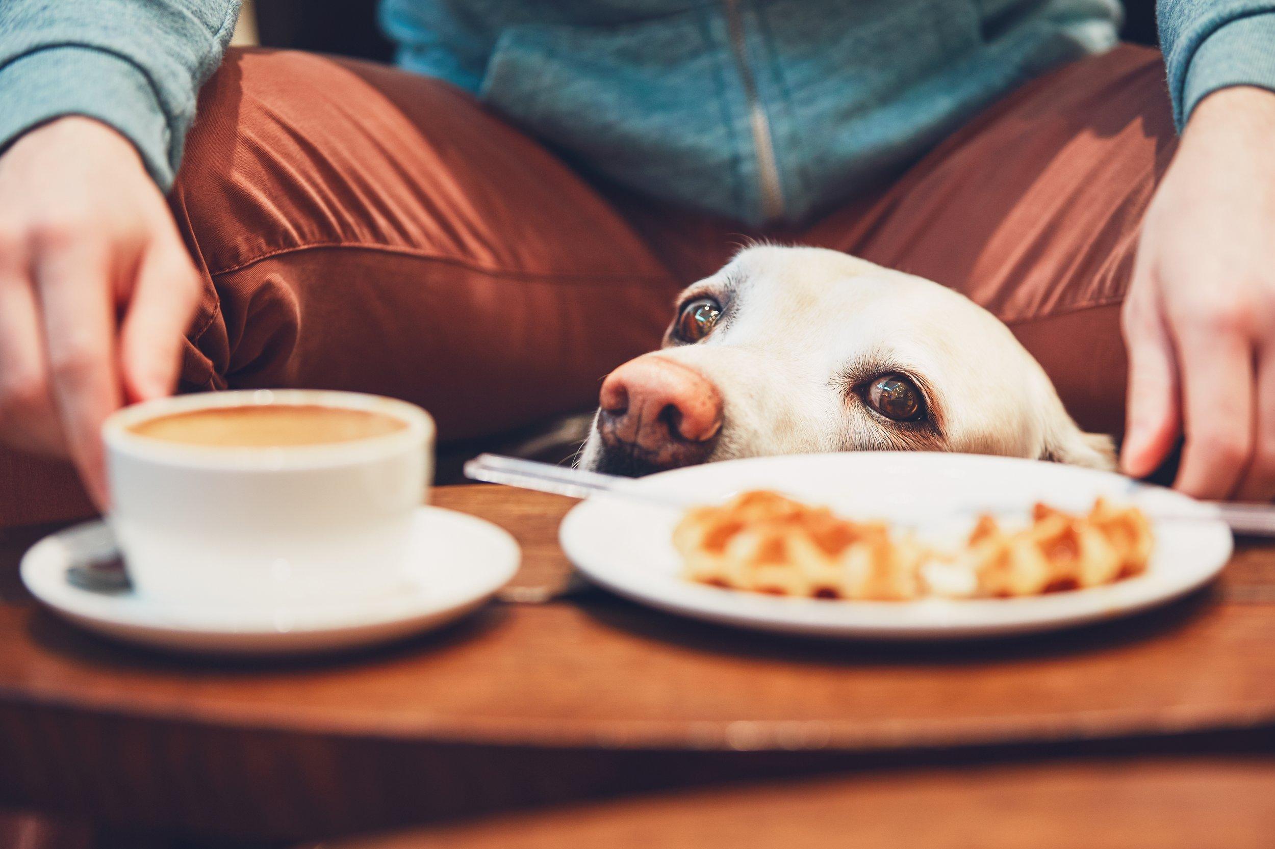 curious-dog-in-the-cafe-PT2BLZC.jpg