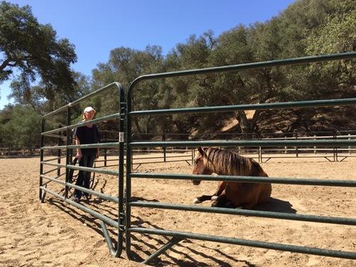 horse sitting.jpeg