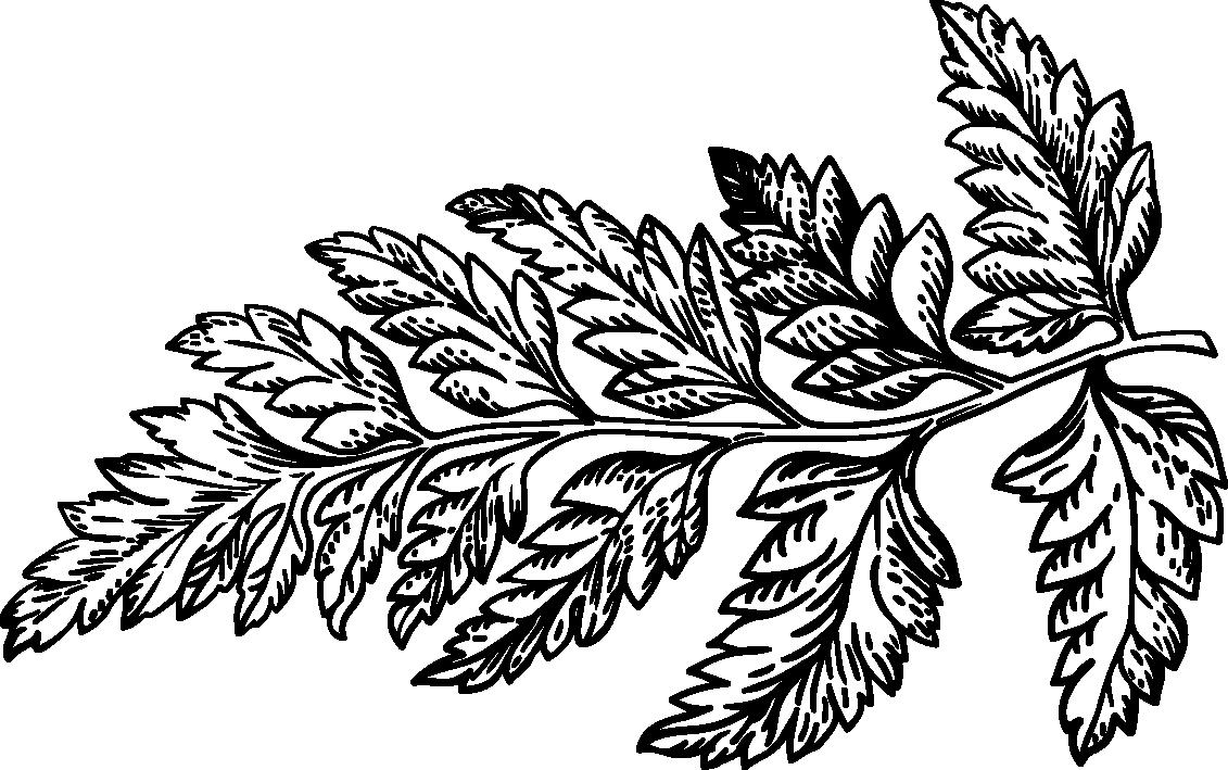 DC Leaf.png