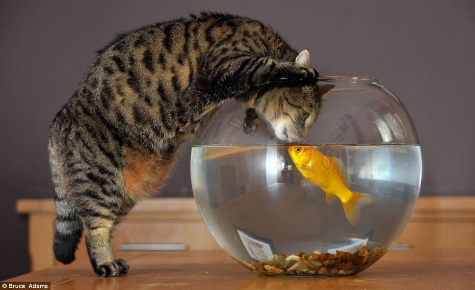 13.3 Goldfish and Macro – Raneko, Flicker