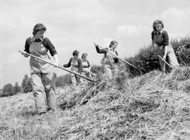 Making Hay – Wikicommons
