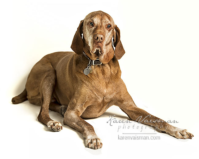 Classic Dog Portraits - Karen Vaisman Photography - (818) 991-7787 - Thousand Oaks
