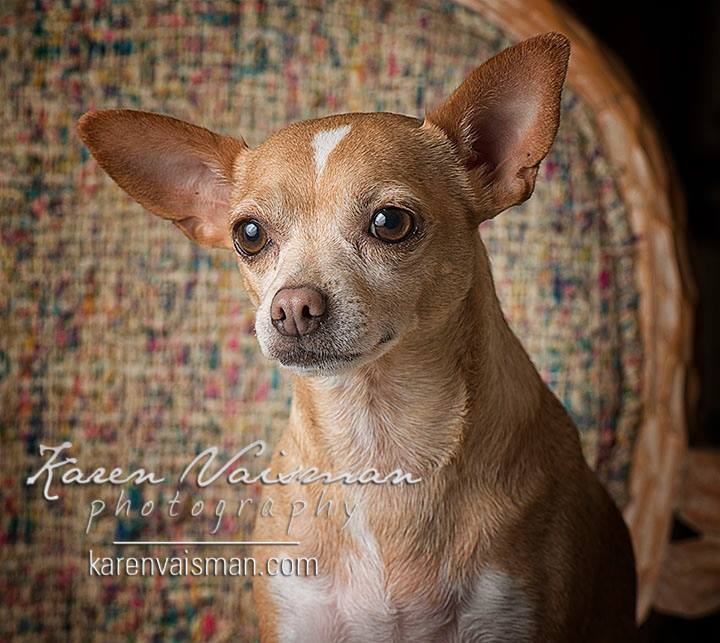 Doggie Love Portraits! (818) 991-7787 - Calabasas - Karen Vaisman Photography