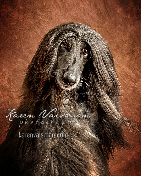 Artistic Pet Portraits - Custom Designed - (818) 991-7787 - Karen Vaisman Photography - West Hills - Camarillo - Malibu - Newbury Park