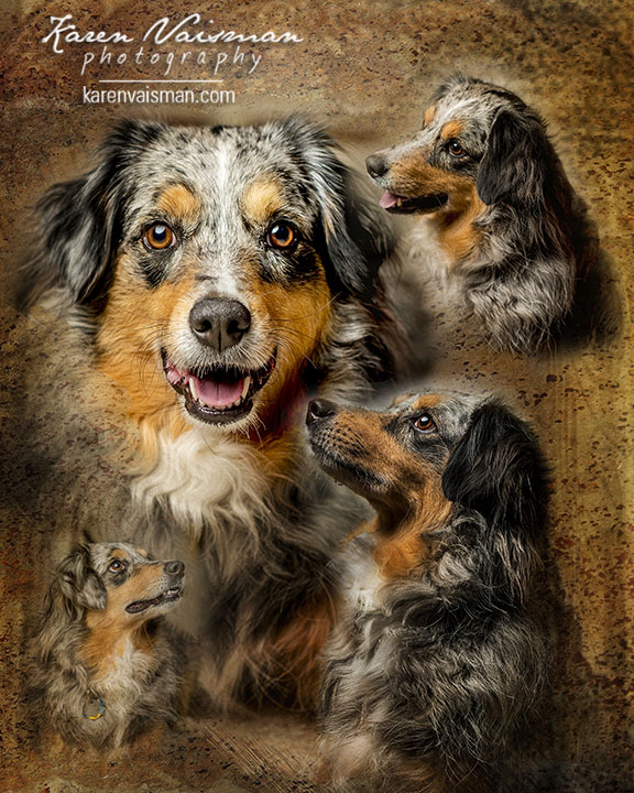 Artistic Dog Montages - Malibu - Camarillo - (818) 991-7787 - Karen Vaisman Photography