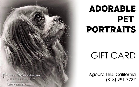 Pet Portrait Gift Cards - Make the Perfect Gift of Love! Any Amount, Use Anytime! Click  HERE  to order.