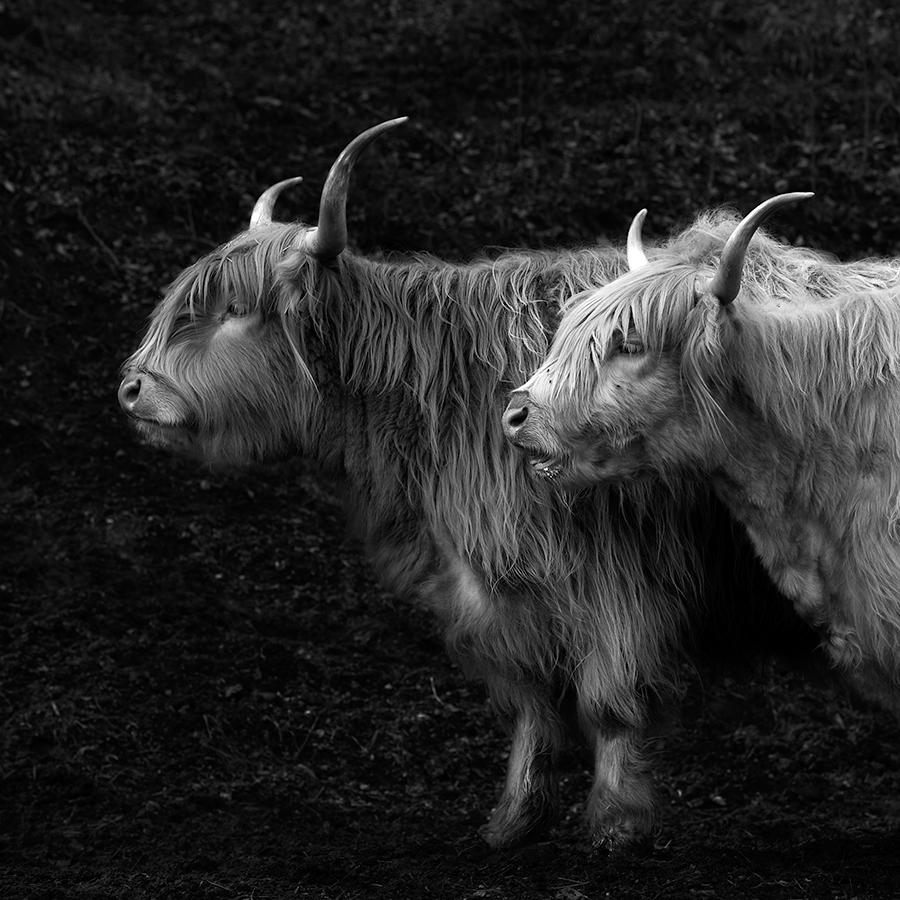 Highland Friends