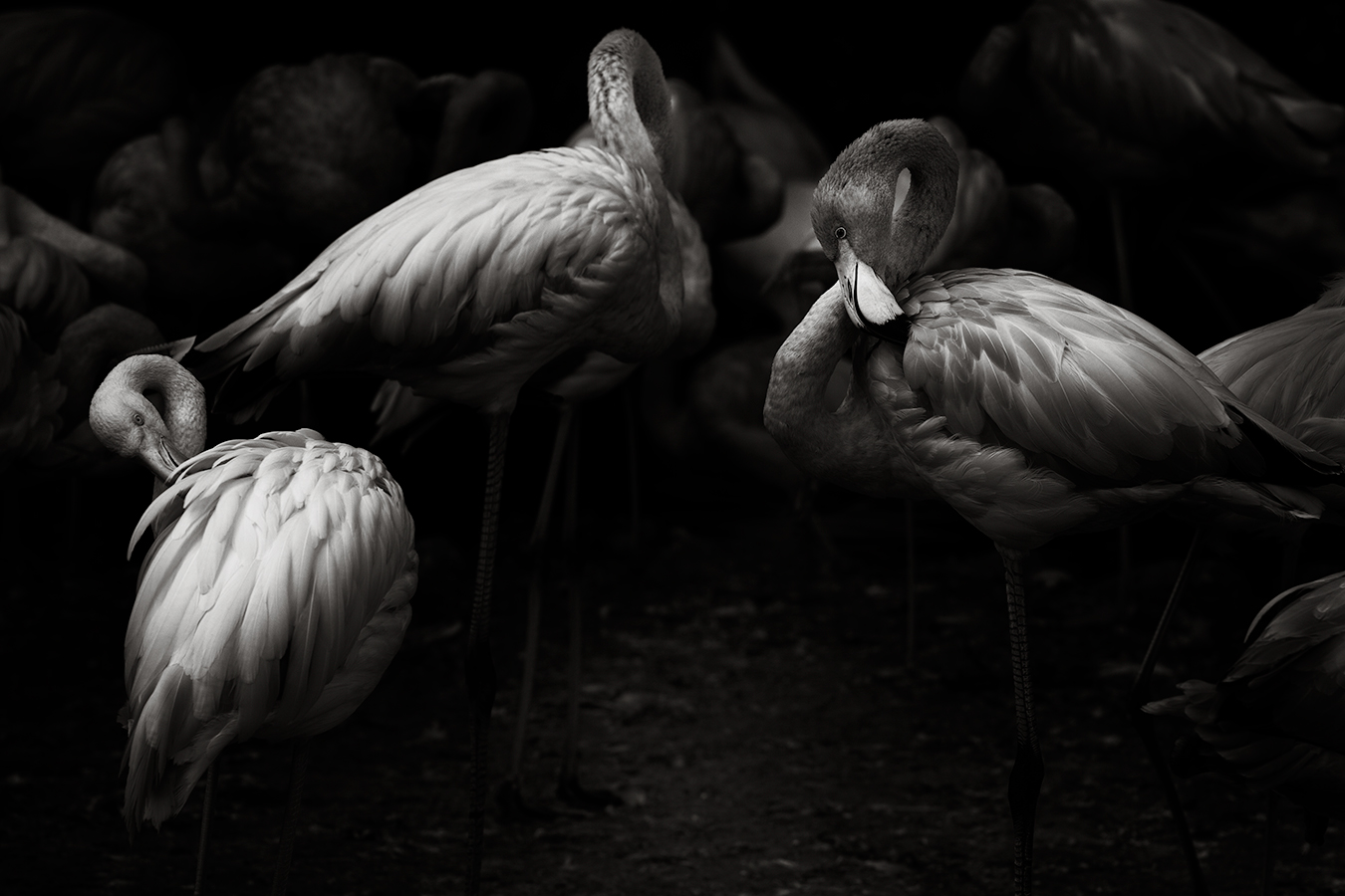Flamingo Clearing