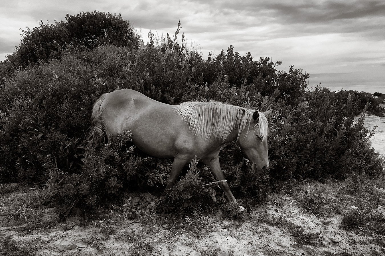 Horse in the Bush