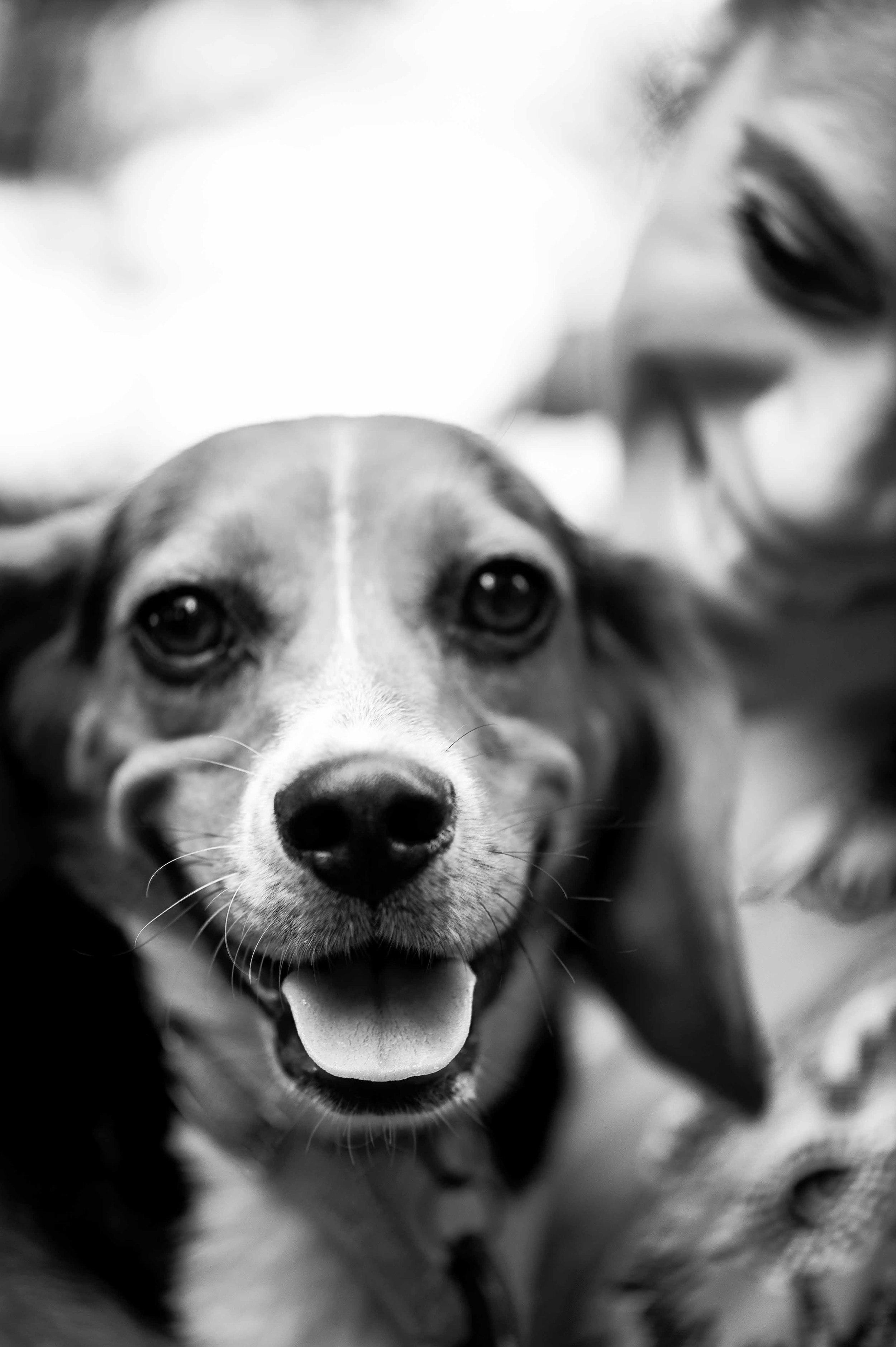 Bama the Beagle