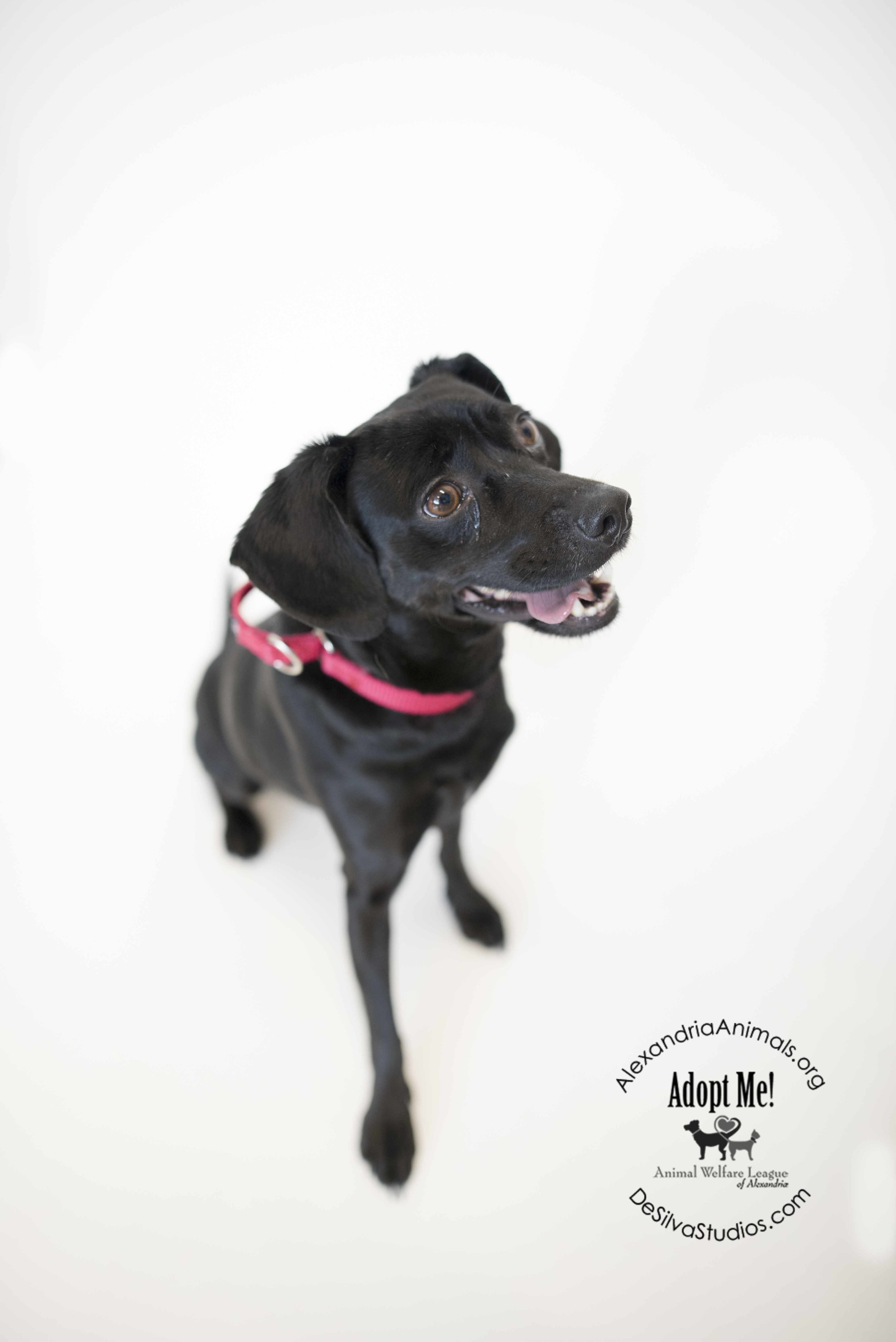 4-26-2016-Dog-Sudley.jpg
